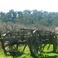 Photo of old wooden cart in orchard