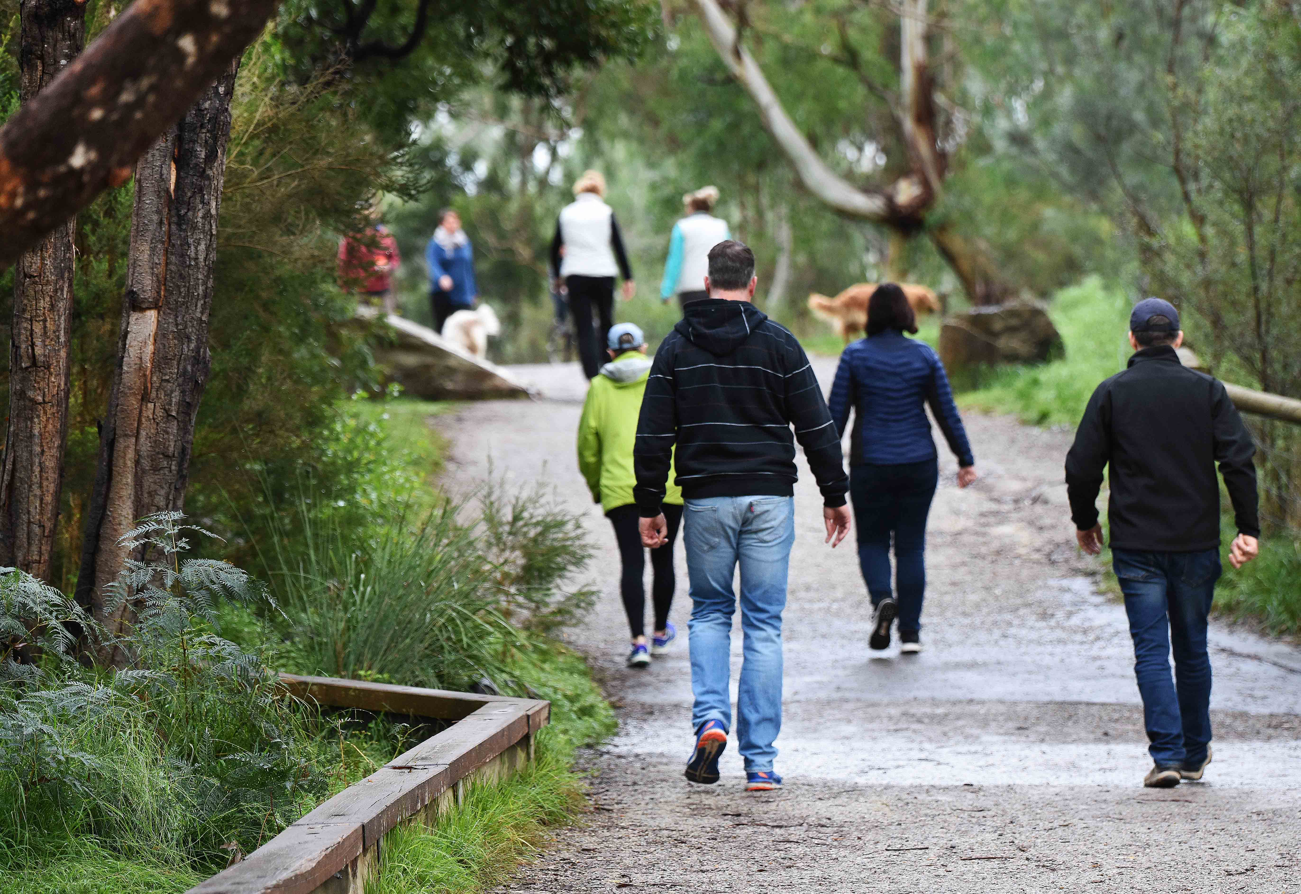 Photograph of people walking along a track in Warrandyte amongst trees and other vegetation