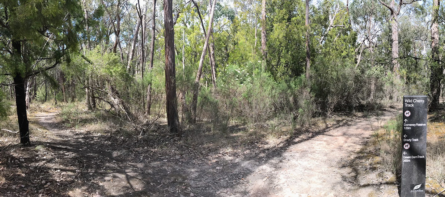 Walking track in 100 acres reserve